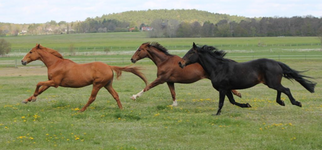 Durchführung einer Umfrage zum Weidemanagement – Giftpflanzen in der Pferdehaltung
