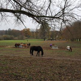 Anmeldung für eine Exkursion zur Pferdehaltung Galgenberghof möglich
